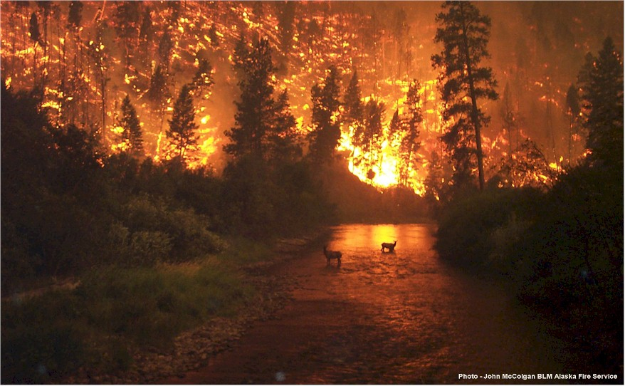 Forest fire- Global warming
