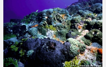 coral may be effected by ocean acidification