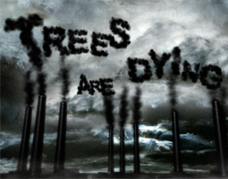 trees are dying