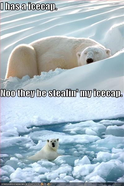 http://www.blog.thesietch.org/wp-content/uploads/2007/11/funny-pictures-polarbear.jpg