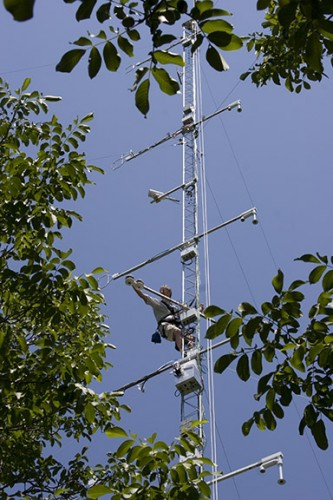 Scientists used specially-equipped towers to measure chemical emissions from plants in a walnut grove in California.