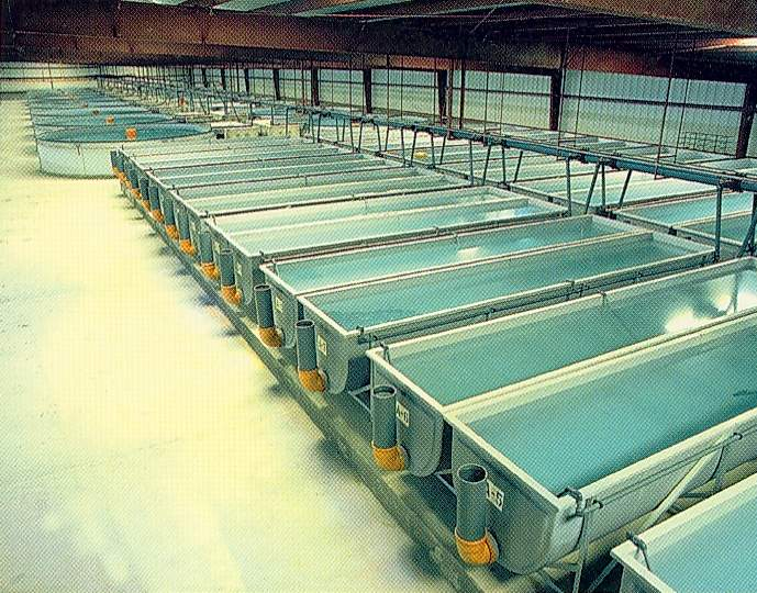 indoor fish farming equipment