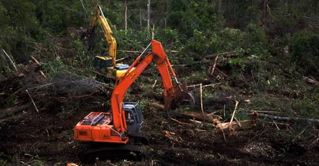 ...now you don't. Bulldozers chew into what was pristine forest.