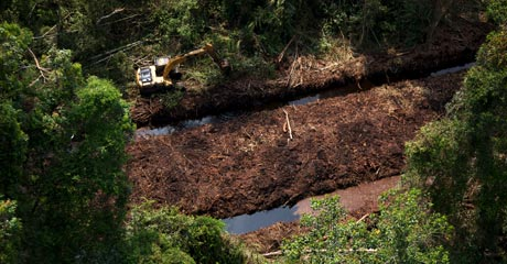 Clearing away trees alongside a drainage canal in Riau's peatlands