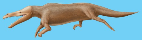 Male Maiacetus inuus as it would have appeared in life.