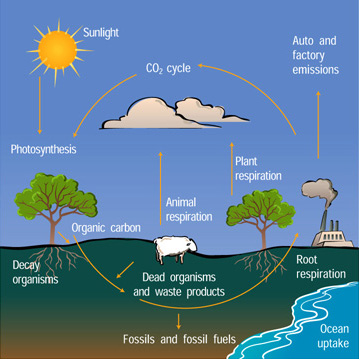 Carbon cycle the sietch blog for Soil life cycle