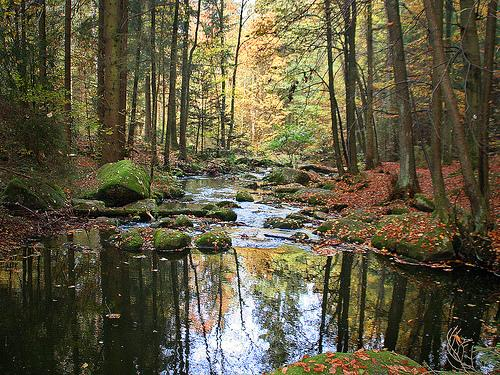 Towards a new understanding of forests and water