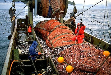 Fish   on Is Recommending An End To Most Commercial Fishing In The Deep Sea